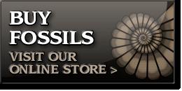 collina menta piperita perdita  Charmouth Fossil Shop with fossils for sale